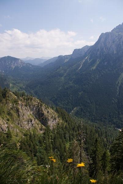 Blick nach Süden vom Tegelberg in die Ammergauer Alpen