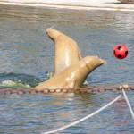 Robbarium im Westküstenpark Sankt Peter-Ording