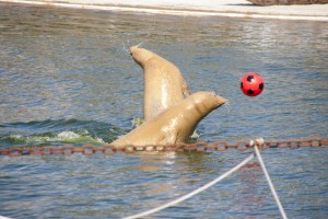 Seehunde im Westküstenpark St. Peter-Ording