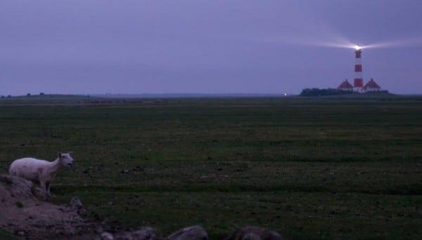 Westerhever Leuchtturm bei Sonnenaufgang mit Schaf