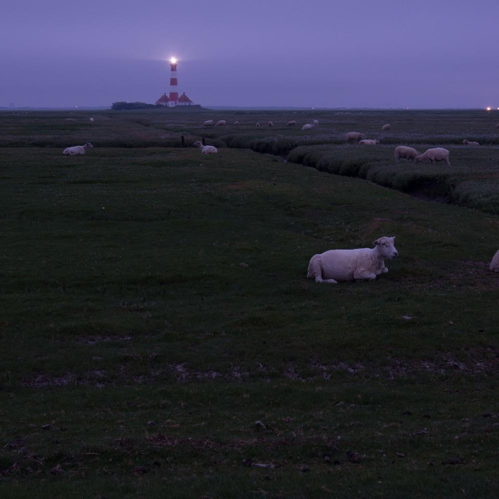Leuchtturm Westerhever bei Sonnenaufgang mit Schafen