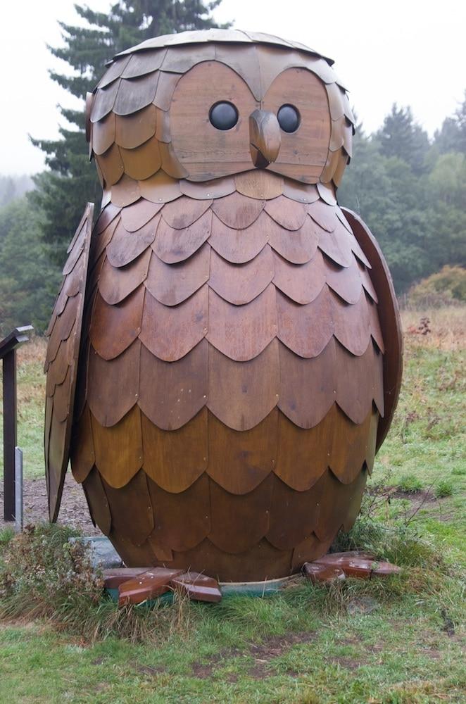 Die Höreule vom Löwenzahnpfad Drei Annen Hohne im Nationalpark Harz
