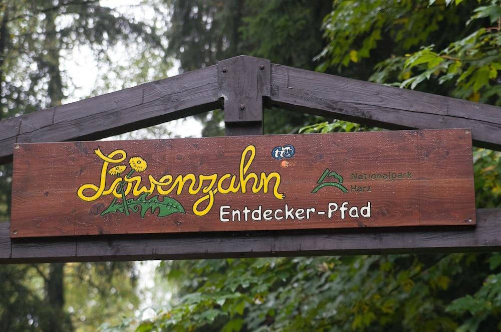 Löwenzahnpfad in Drei Annen Hohne im Nationalpark Harz